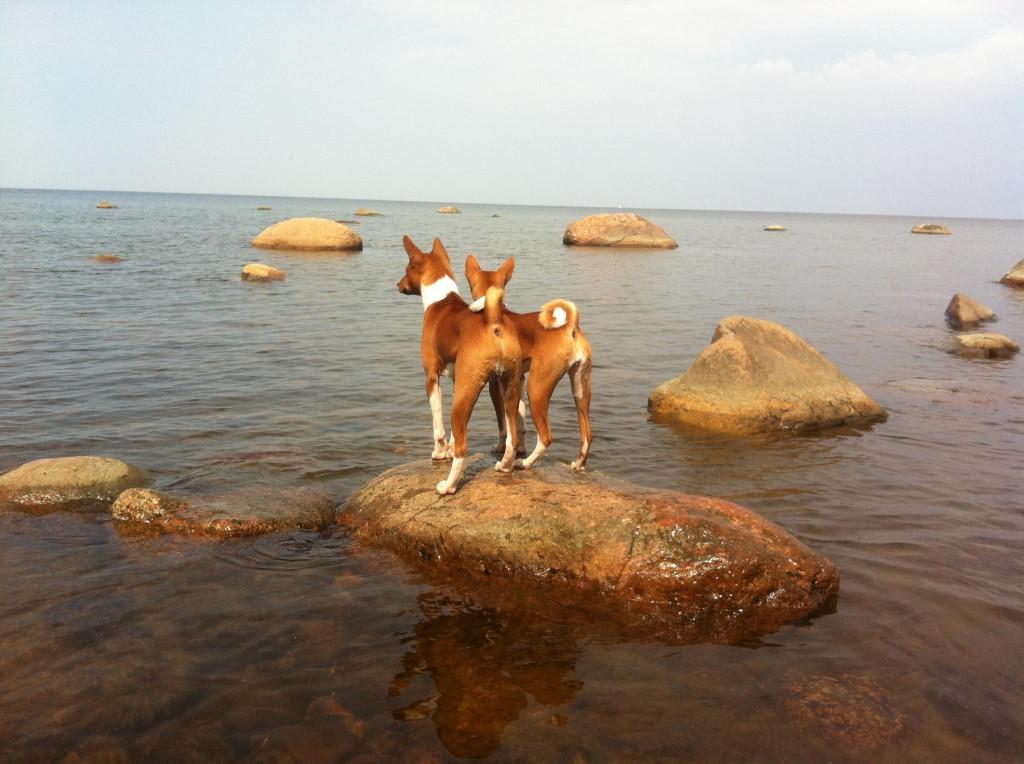 Lili ja Sipsu