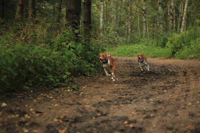 Sipsu ja Lili jooksmas