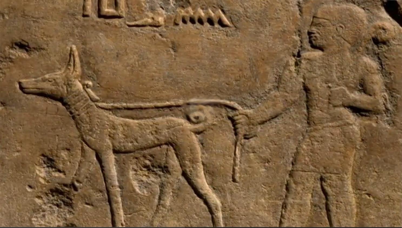 basenji bareljeefid egiptuses